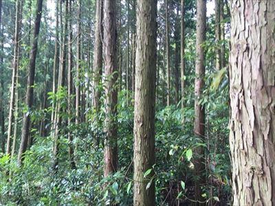 大分でサバゲーを楽しむなら森のフィールドがおすすめ